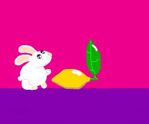 Cute rabbit next to a cute lemon