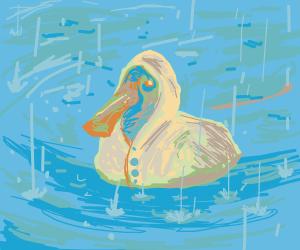 pretty duck in rain