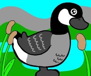 Goose