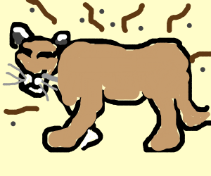 Stinky Cougar