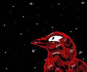 Crow admiring the night sky