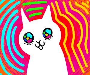 Cat on acid