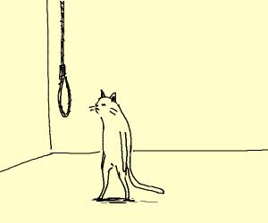 Suicidal cat