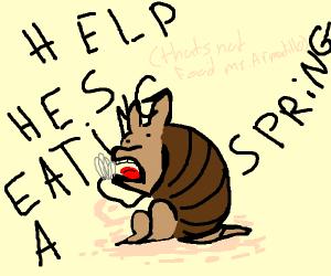 Armadillo eating a Spring