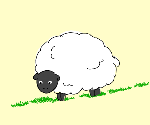 one fluffy sheep