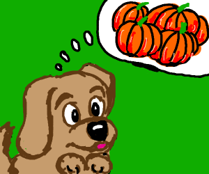 puppy thinkin of pumpkins