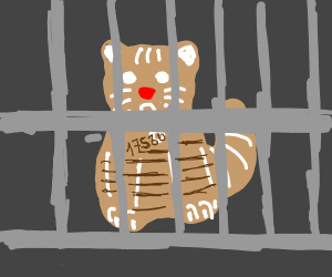 Ginger cat is in jail