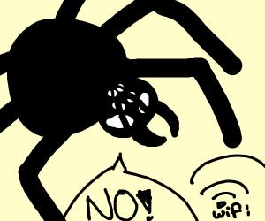 Spider Refuses wifi