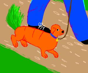 Man walks carrot dog