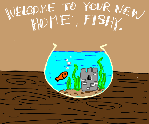 Welcome to your new home, fishy.