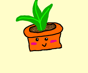 Potted plant is happy