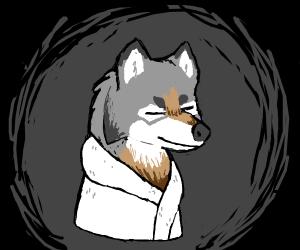 Wolf wearing a bathrobe