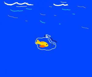 Fish in bag lost at sea