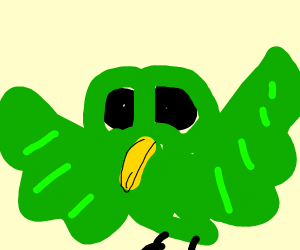 Green birb staring directly at you