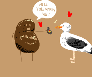 potato getting engaged to a seagull