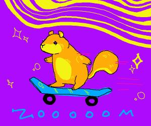 squirrel on a skateboard