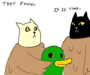 Ducks are secretly cats