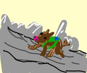 Boar Hiking