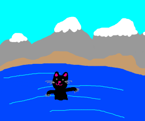 Black cat in a pool