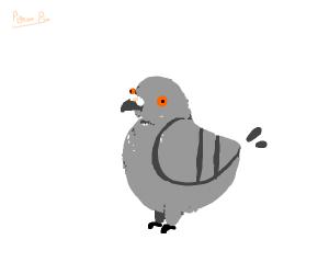 Pigeon PIO