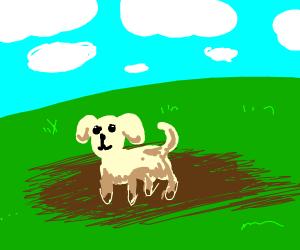 Dog playing in mud