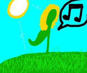 sunflower singing