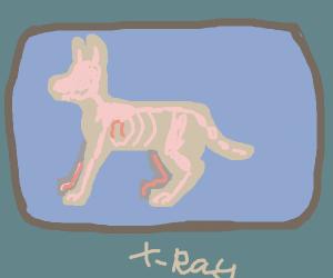 dog x-ray