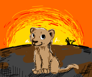 cute lion at sunset