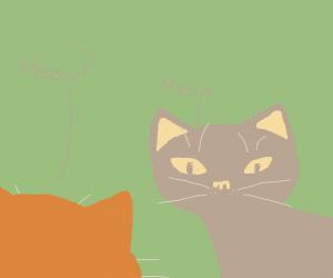Uhh... meow?