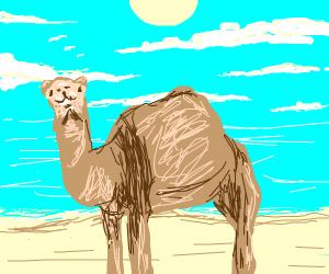 a camel on a beach