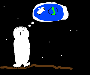 Owl dreams of creating worlds