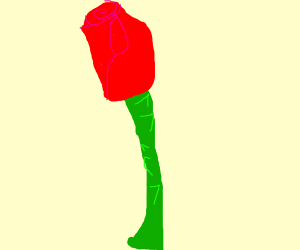 A prickly rose
