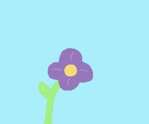 4 leaved purple flower