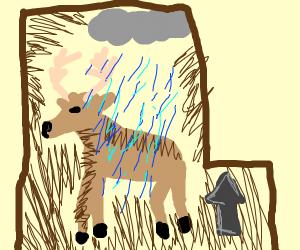 raindeer in a boxl