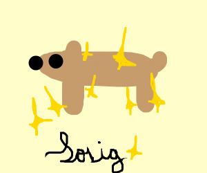 Sparkling dog