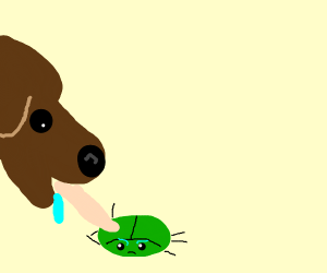 Dog licking a bug