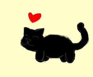 Black kitten loves you