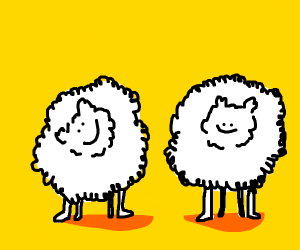 Two fluffy sheeps