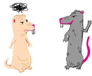 Naked mole rat is jealous of normal rat
