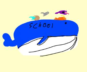 Wailord Schoolbus