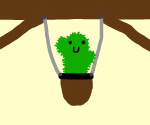 Hung cactus