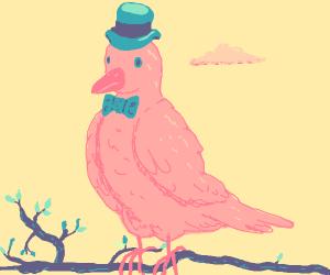 a fancy dove gentleman