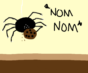 Tarantula eating a Cookie