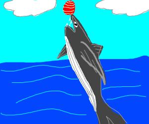Pet Orca