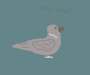 Bird saying my ero