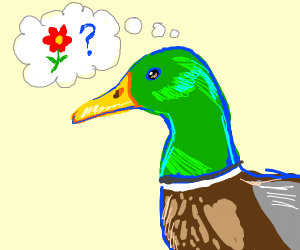 duck doesn't know what a flower is