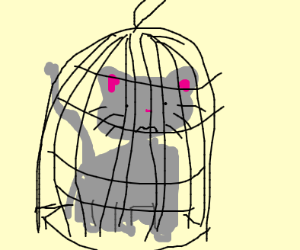 Cat in a birdcage