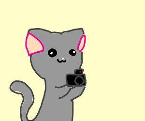 Cat filming a video