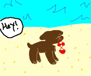 dog holding a bikini