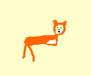 A fox with no front legs